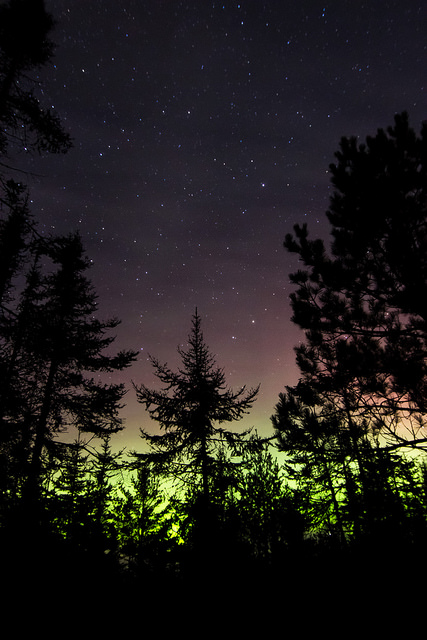 Ring of trees surrounded by green aurora borealis